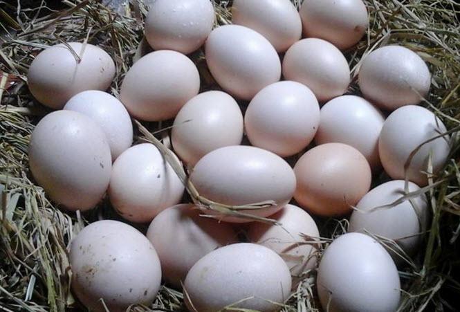 Tìm hiểu thành phần của trứng gà so